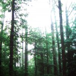 roosevelt woods